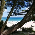 Looking through the trees onto Porthminster beach in St Ives