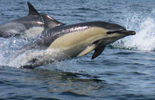 Padstow sea life safari dolphins